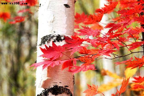 九月长白山红叶摄影采风团